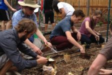 Community gardens provide Westminster students and community opportunity to reduce carbon footprint