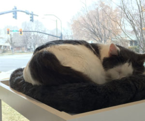 "Salt Lake's first cat cafe might reflect an increase in ""cat-centric"" environments"