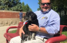 Dos and don'ts, dog policies at Westminster