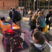 Pups and Politicians: students get involved with midterm election